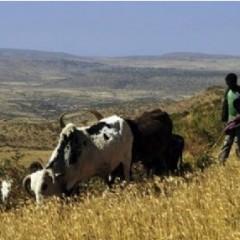 Afrique – Climat : l'Éthiopie ouvre le bal du financement du fonds spécial Clim-Dev