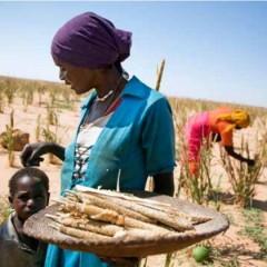 Le Sénégal face aux  défis du changement  climatique