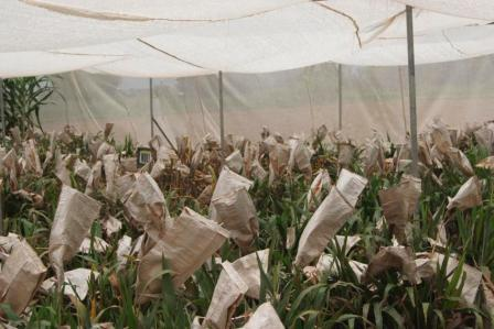 What you need to know about crop modification