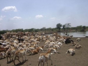 pastoralismsudan