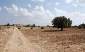 Séchéresse en Tunisie