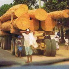Changement climatique et Protection des forêts au Cameroun