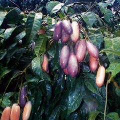 Le Ndor : pour la sécurité alimentaire