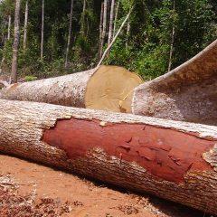 COP 22- CONGO- BRAZZAVILLE: Formation à la gouvernance forestière