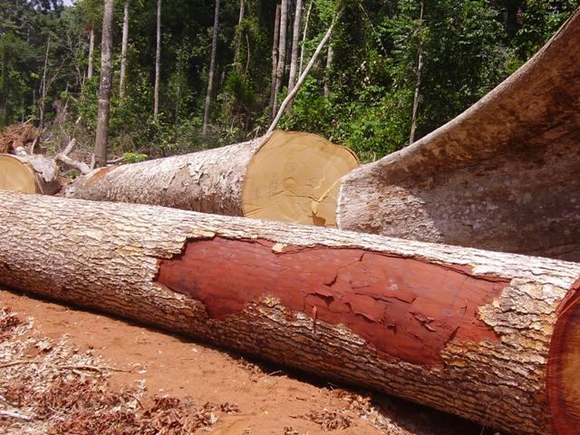 COP 22- Congo- Brazzaville : Révision du plan de convergence de la COMIFAC