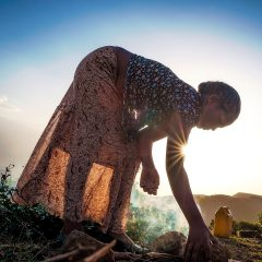 COP 23- Africa- Pacific: The Green Climate Fund in figures