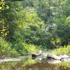 """COP 23: «REDD + prêt à jouer son rôle""""- Coalition des Nations à Forêts Tropicales Humides"""
