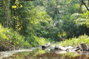 Les mangroves ( Pointe Noire)