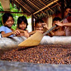 Guayapi: découverte des savoirs ancestraux