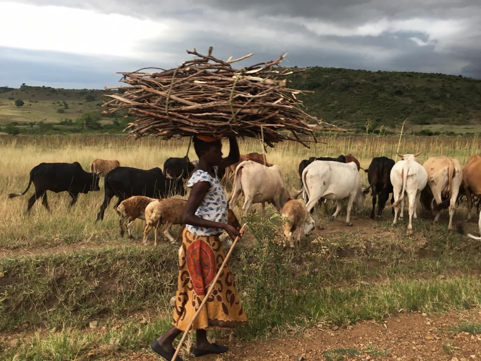 COP 23: Les projets africains bénéficiaires du fonds vert