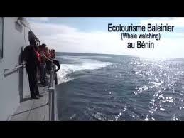 Ecotourisme Baleinier au Bénin