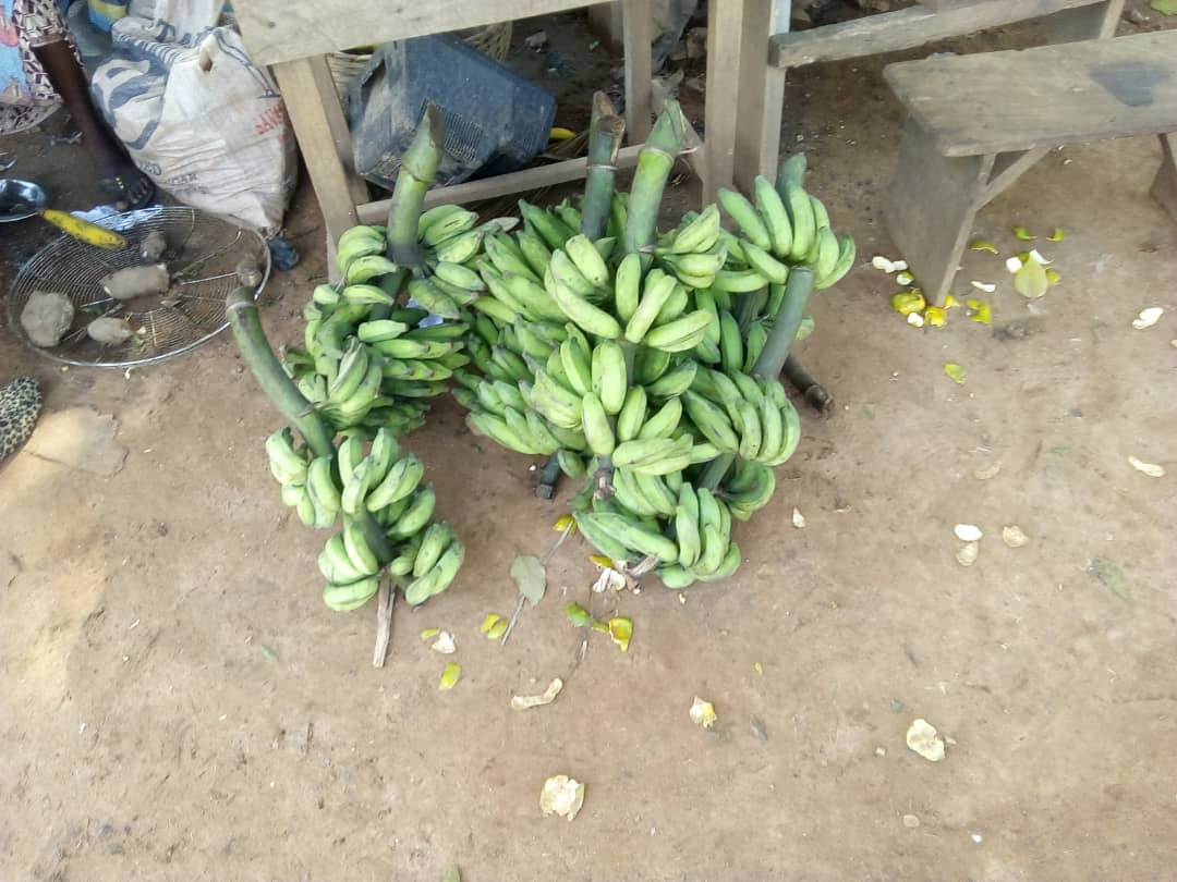 Plantain helps to address food security in Nigeria