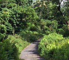 Le droit foncier: une réelle problématique aux Comores