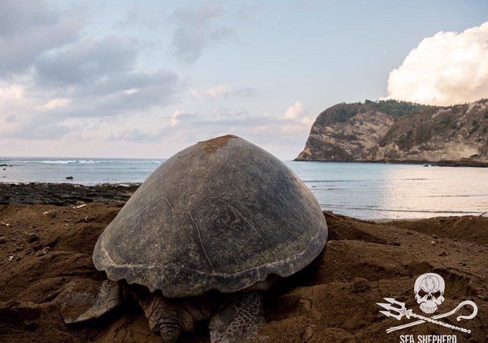 """Mayotte est un trésor de biodiversité""- Lamya Essemlali ( Sea Shepherd France)"