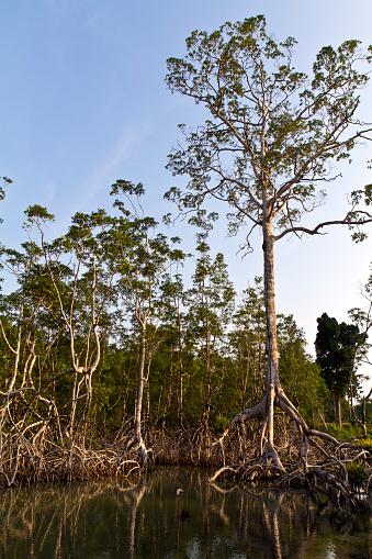 La  restauration de la  mangrove: point fort de la Journée Mondiale de l'Environnement au Gabon